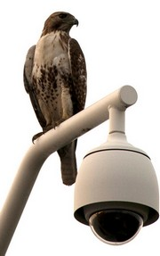 Hawk Security